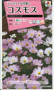 花種子 『 タキイ種苗 』 コスモス アポロラブソング 40粒袋詰 【 送料無料 】