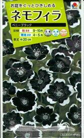 花種子 『タキイ種苗』 ネモフィラ ペニーブラック 0.6ml袋詰 【送料無料】