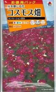 コスモス畑 『タキイ種苗』 センセーション混合 15ml袋詰 【送料込み】