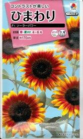 花種子 『 タキイ種苗 』  ひまわり(ソーラーパワー) 2粒袋詰 【 送料無料 】