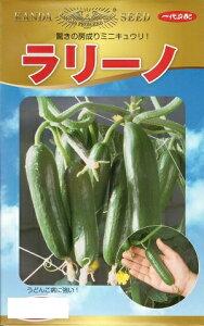 野菜種子 ミニきゅうりたね (神田育種農場) ラリーノ 1000粒袋詰 【送料無料】