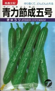 野菜種子 きゅうりたね 高農交配 青力節成五号胡瓜 20ml袋詰 (約400粒) 【送料無料】