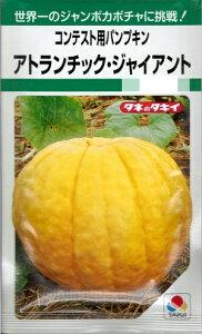 野菜種子 かぼちゃたね (タキイ種苗) アトランチック・ジャイアント 6粒袋詰 【送料無料】 コンテスト用パンプキン