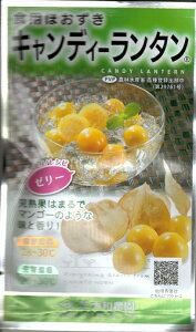 野菜種子 ほおずき種 『 大和農園 』 キャンディーランタン 14粒袋詰 【 送料無料 】