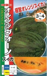 野菜種子 『ナント種苗』 スイカ種子 オレンジヴォーノ 8粒袋詰 【送料無料】