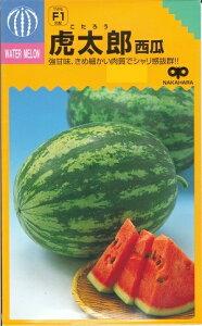 野菜種子 『中原採種場』 小玉すいか種子 虎太郎 200粒袋詰 【送料無料】