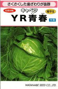 野菜種子 キャベツ 甘藍 (渡辺採種場) YR青春  1.5ml詰 【送料無料】