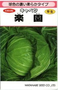 野菜種子 キャベツ 甘藍 【渡辺採種場】 楽園 1.4ml袋詰 (送料無料)