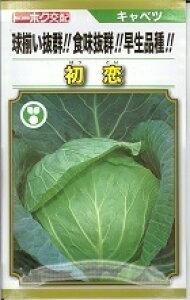 野菜種子 キャベツ種 『 トーホク 』 初恋 1.5ml袋詰 【 送料無料 】