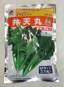 野菜種子 ホウレンソウ 『 タキイ種苗 』 弁天丸 M3万粒袋詰 【 送料無料 】