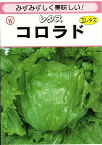 野菜種子 レタス 『 渡辺採種場 』 コロラド 20ml袋詰 【 送料無料 】
