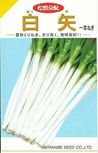 野菜種子 一本ネギたね (渡辺採種場) 白矢 3ml袋詰 【送料無料】