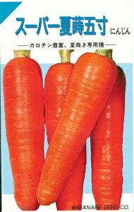 野菜種子 にんじん 『 渡辺採種場 』 スーパー夏蒔五寸 7ml袋詰 【 送料無料 】