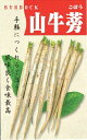 野菜種子 『渡辺採種場』 山牛蒡 1dl袋詰 【送料無料】