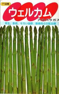野菜種子 アスパラガス (サカタのタネ) ウエルカム 20ml袋詰【送料無料】