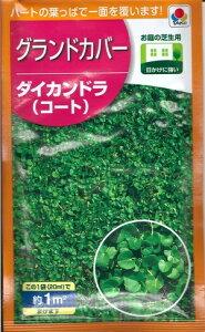 芝の種子 『タキイ種苗』 お庭の芝生用 グランドカバー ダイカンドラ(コート) 20ml袋詰(約1分) 【送料無料】