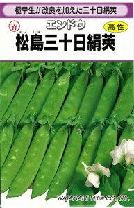 野菜種子 エンドウたね (渡辺採種場) 松島三十日絹莢 30ml袋詰 【送料無料】