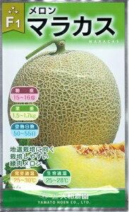 野菜種子 『大和農園』 メロン種子 マラカス 8粒袋詰 【送料無料】