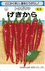 野菜種子 『トウガラシタネ』 渡辺採種場 げきから 1.8ml袋詰 【送料無料】