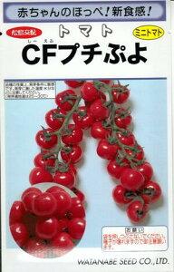 野菜種子 『トマトタネ』 松島交配 (渡辺採種場) CFプチぷよ1000粒袋詰 【送料無料】