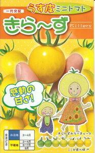 野菜種子 『ミニトマトタネ』 一代交配 (ナント種苗) きら〜ず 500粒袋詰 【送料無料】