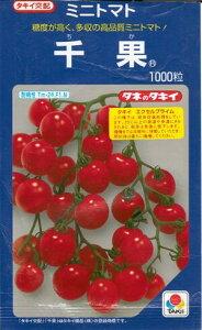 野菜種子 『ミニトマト』 タキイ交配(タキイ種苗) 千果 1000粒袋詰 【送料無料】
