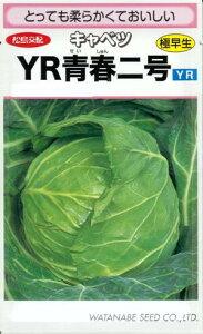 野菜種子 『キャベツタネ』 松島交配  (渡辺採種場) YR青春二号 20ml詰 【送料無料】