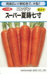 野菜種子『ニンジンタネ』 一代交配  (渡辺採種場)  スーパー夏蒔七寸 1dl袋詰 【送料無料】