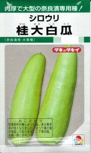 野菜種子『シロウリタネ』(タキイ種苗) 桂大白瓜 60粒袋詰【送料無料】