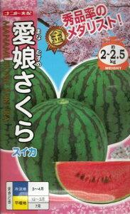 野菜種子『小玉スイカ』ナント交配(ナント種苗)愛娘さくら 200粒袋詰 【送料無料】
