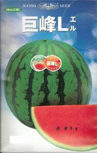 野菜種子 『大玉スイカ』 神田交配(神田育種) 巨峰L 12粒袋詰 【送料無料】