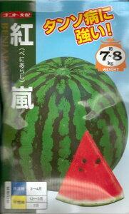 野菜種子 『大玉スイカ』 ナント交配 (ナント種苗) 紅嵐 200粒袋詰 【 送料無料 】