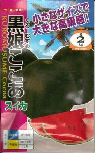 野菜種子 『黒皮こだまスイカ』 ナント交配 (ナント種苗)   黒娘ここあ 8粒袋詰 【 送料無料】