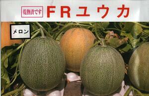 野菜種子 『メロンたね』 日本園芸生産研究所 FRユウカ 100粒袋詰 【送料無料】
