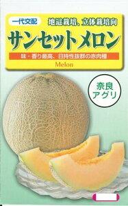野菜種子 『メロンたね』 一代交配 奈良アグリ サンセット 100粒袋 【送料無料】