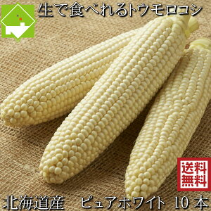 とうもろこし 送料無料 低農薬栽培 北海道産 生で食べれる 白いトウモロコシ ピュアホワイト 10本 ハウス栽培 別途送料が発生する地域あり 日時指定不可 7月上旬発送開始