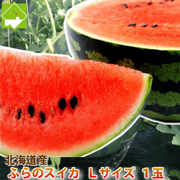 北海道富良野産 有機肥料でとっても甘く育ったスイカ Lサイズ(5kg以上) 1玉【10P03Dec16】