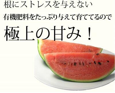すいか北海道富良野産富良野スイカ3Lサイズ7.5kg以上1玉送料無料
