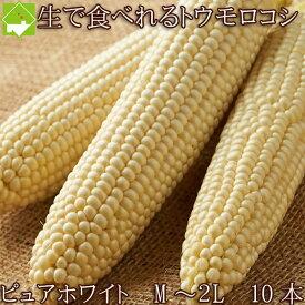 生で食べれる 白い とうもろこし ピュアホワイト 10本入り Mから2Lサイズ混み 北海道 富良野産 送料無料 日時指定不可 9月15日から9月30日までに配送