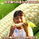2セット買うと2セットおまけ!【幻】の白いとうもろこし 北海道富良野産 ピュアホワイト 5本(サイズ:Mサイズから…