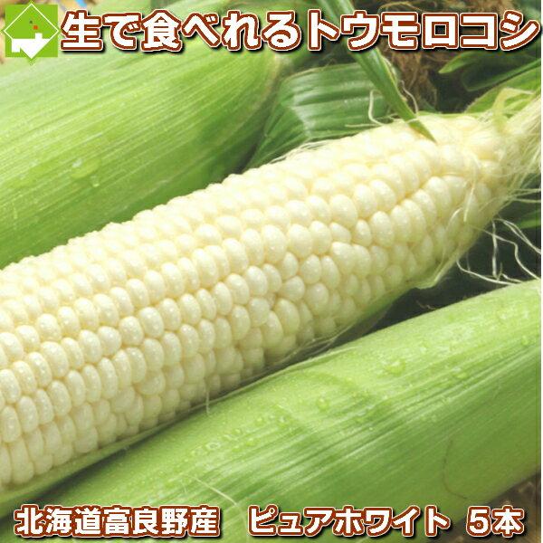 【幻の白いとうもろこし】北海道富良野産 激安 ピュアホワイト5本 【送料無料】【10P03Dec16】