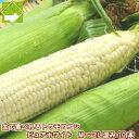 とうもろこし 北海道富良野産 生で食べれるトウモロコシ ピュアホワイト 10本【送料無料】