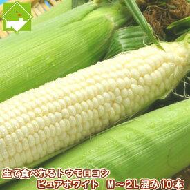 北海道富良野産 激甘トウモロコシ ピュアホワイト10本入り(Mから2Lサイズ込) 【送料無料】【RCP】【10P03Dec16】