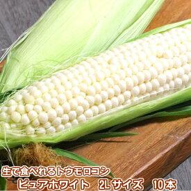 【7月発送】 生で食べられるとうもろこし 北海道富良野産 ピュアホワイト10本 送料無料 別途送料が発生する地域あり