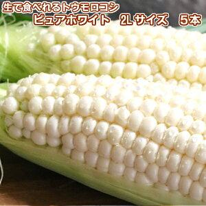 【7月発送】生で食べられる白いトウモロコシ 北海道富良野産 ピュアホワイト 5本