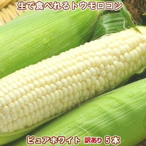 北海道富良野産 白い とうもろこし 訳あり(わけあり)ピュアホワイト 5本入 【送料無料】 【業務用】 【訳まち】