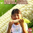 【7月発送】生で食べられる白いトウモロコシ 北海道富良野産 ピュアホワイト 5本 送料無料