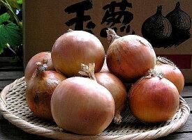 たまねぎ 送料無料 北海道富良野産低農薬であま〜い サラダ玉葱(たまねぎ) 3kg