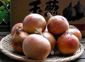 北海道富良野産低農薬であま〜い 玉葱(タマネギ)Lサイズ以上 4.5kg 【送料無料】【10P03Dec16】