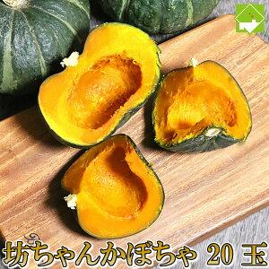 かぼちゃ 送料無料 北海道 富良野産 坊ちゃんかぼちゃ 20玉 別途送料が発生する地域あり
